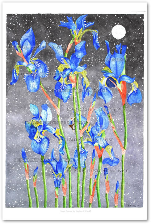Buy Art Prints from leading Contemporary Artist Stephen E Wise - Artwork Title : Moon flowers 2